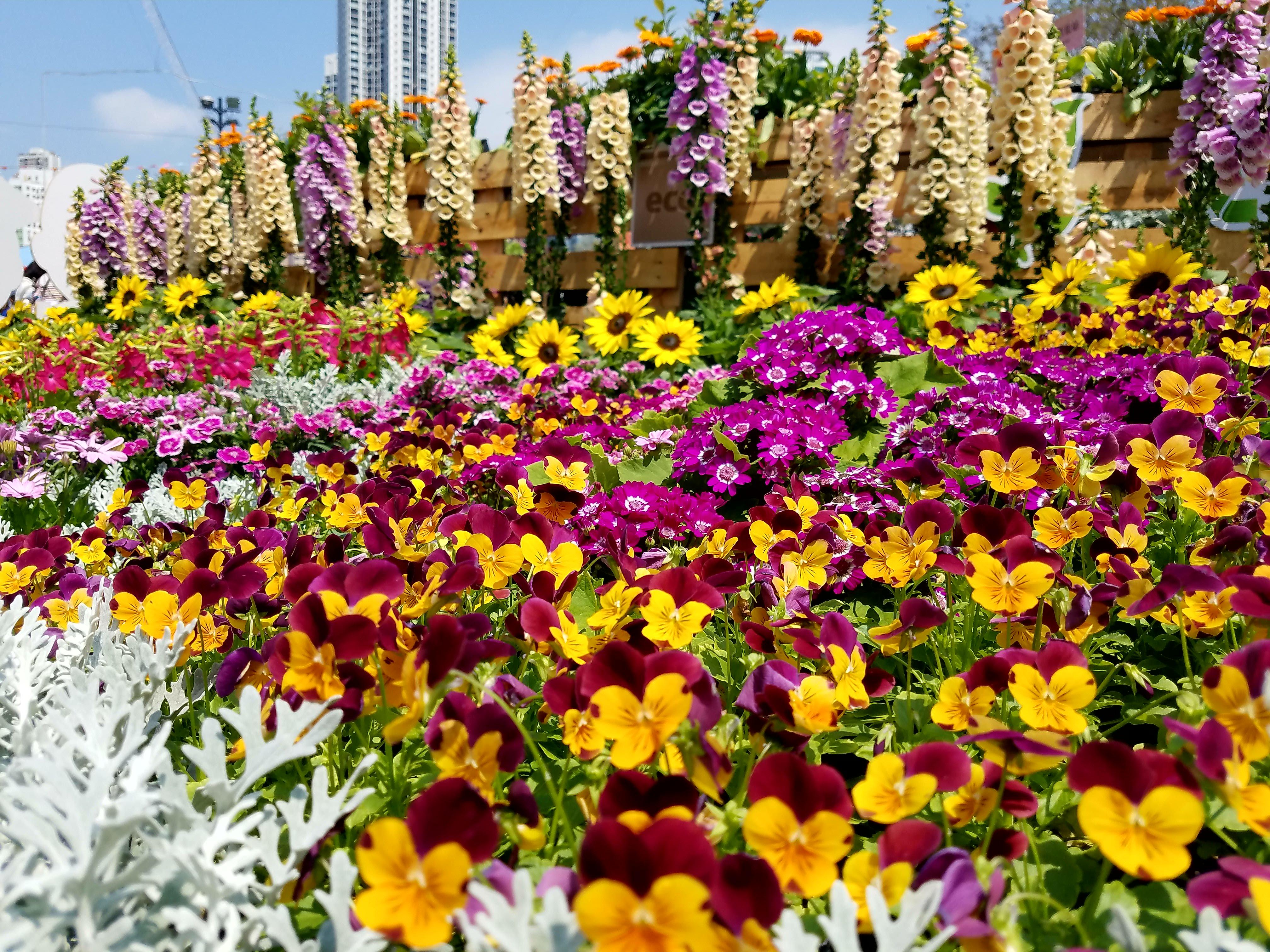 Image result for hong kong flower show
